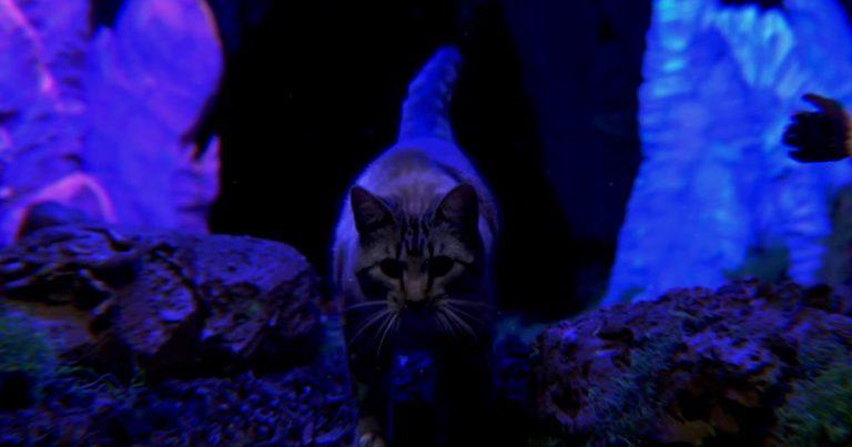 Mastodon y el vídeo de 'Asleep in the deep'