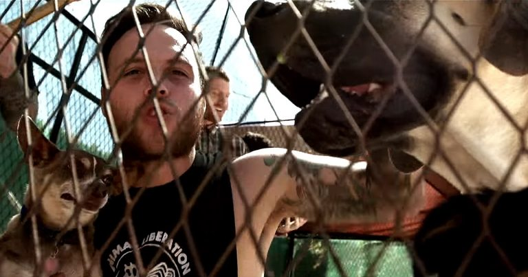 Stick to your Guns y el vídeo de 'Nothing you can do to me'