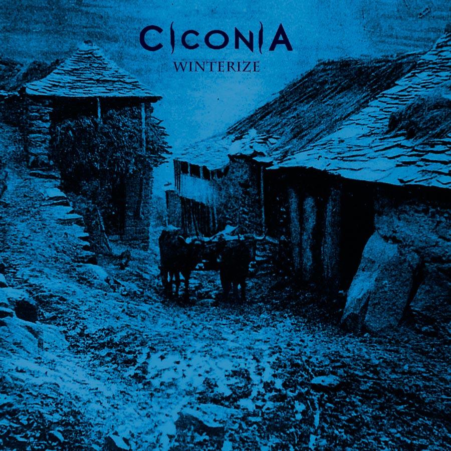 Ciconia 'Winterize'