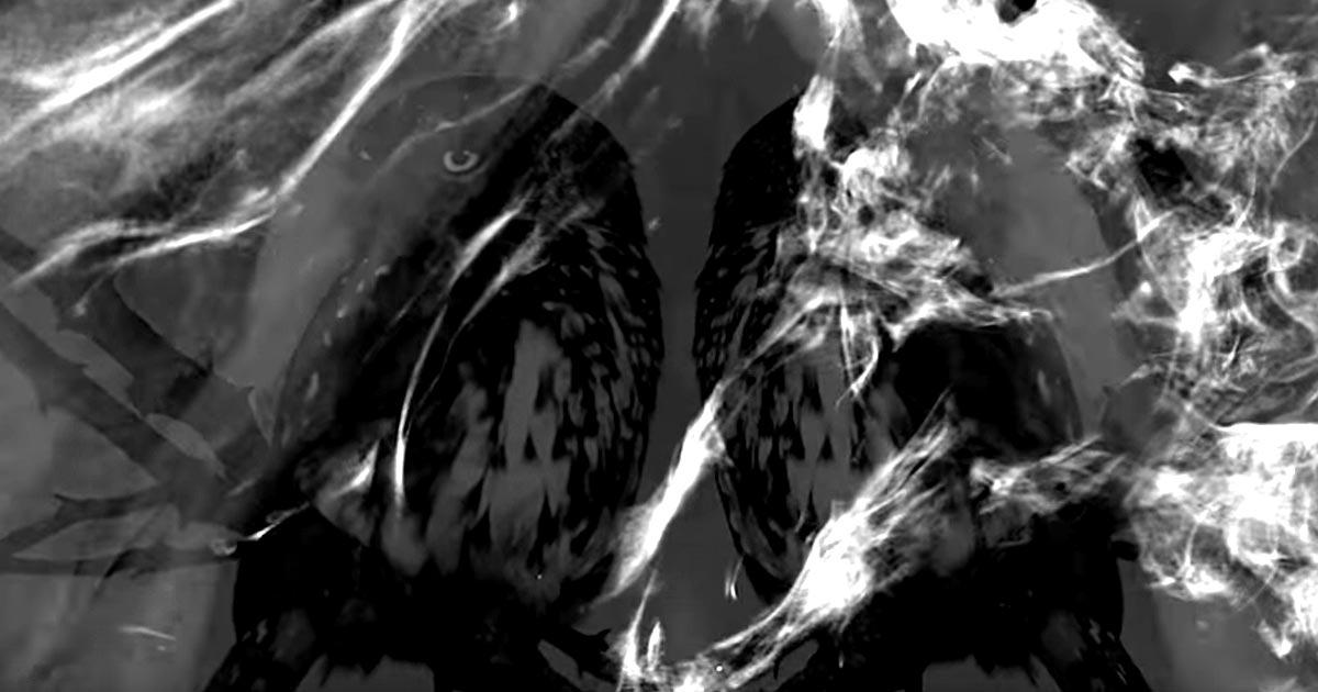 Ivar Bjørnson & Einar Selvik's Skuggsjá y el vídeo de 'Skuggsjá'