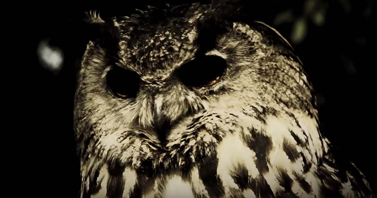 Sun Of The Sleepless y el vídeo de 'The Owl'
