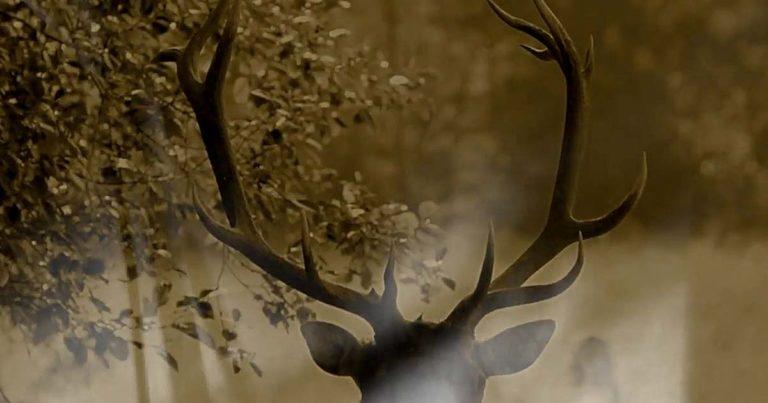 Malke y el vídeo de 'Arboreo'