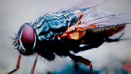 Cane Hill y el vídeo de 'Lord of Flies'
