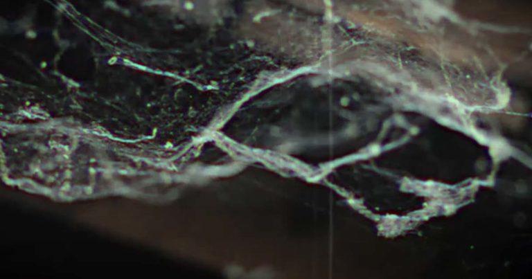 Soul of Anubis estrenan el vídeo de 'Embodied Chaos'